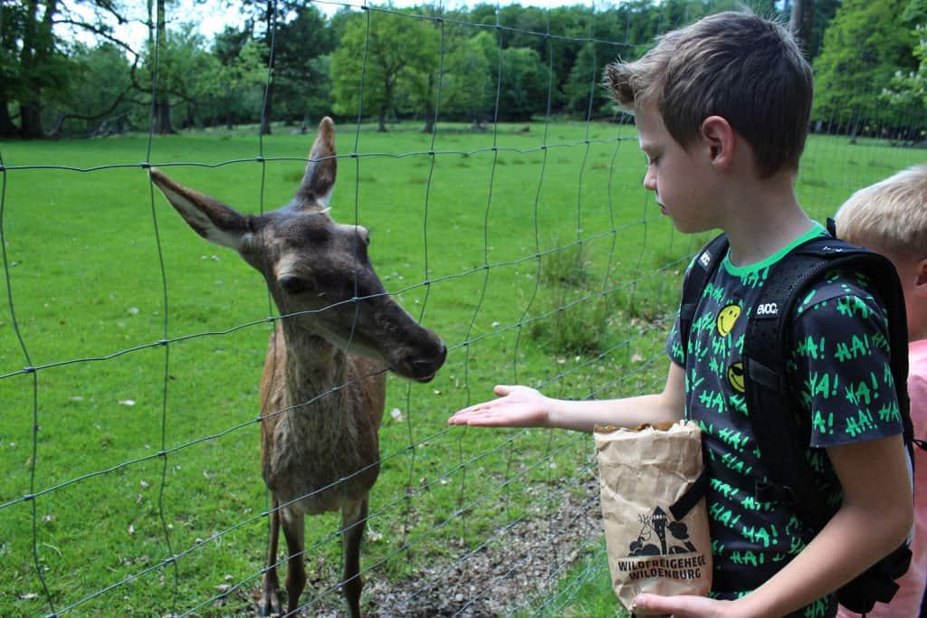 Bij de kassa kopen we zakjes voer. Hierdoor komen de dieren heel dichtbij en kunnen ze goed geaaid worden.