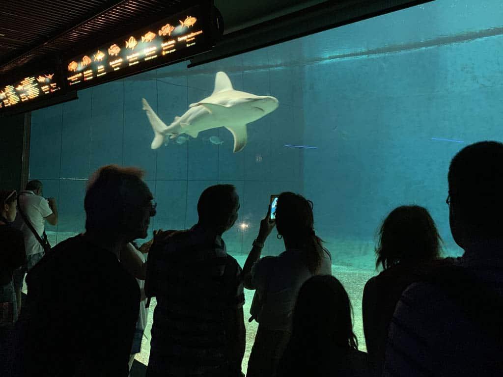 Het is dringen bij de haaien.