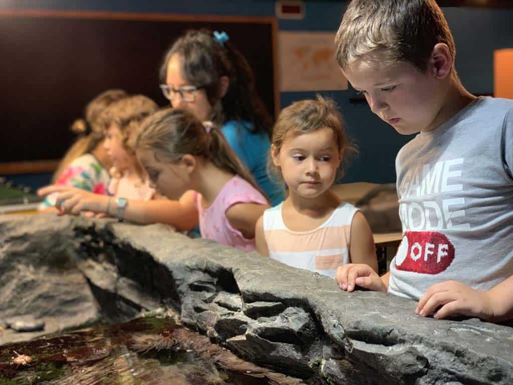 Tijdens de 'achter de schermen'-rondleiding krijgen we o.a. bij deze bak uitleg over het zeeleven.