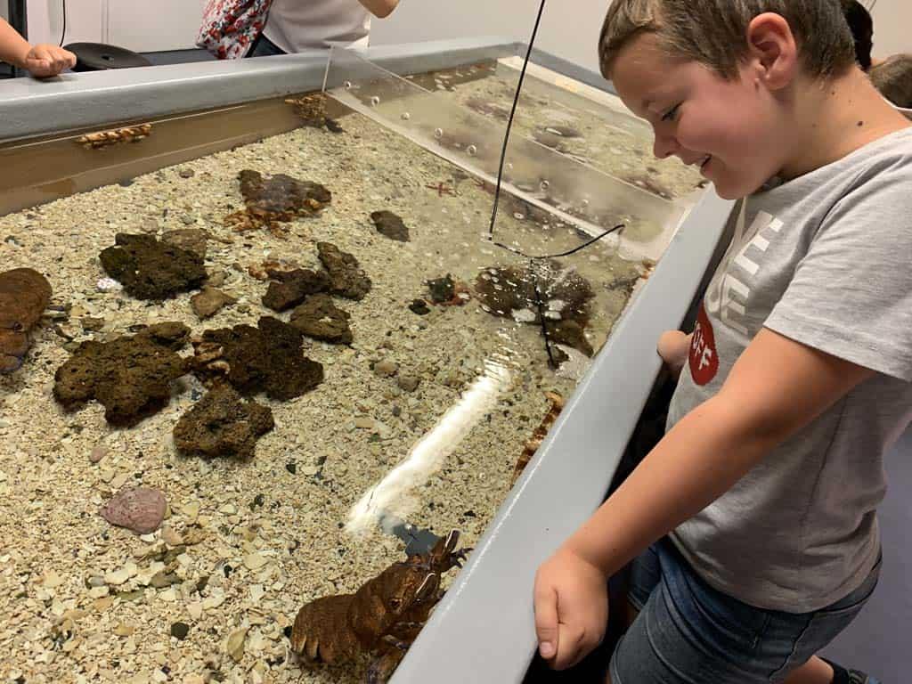 Bijzonder om te zien hoe een krab beweegt. We krijgen uitleg over het wisselen van het uitwendig skelet van deze dieren.