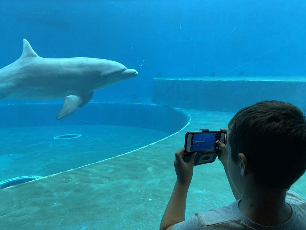 Bij de dolfijnen blijven we lang kijken.
