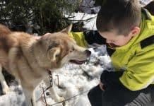 Uren had hij nog wel kunnen knuffelen met de honden.