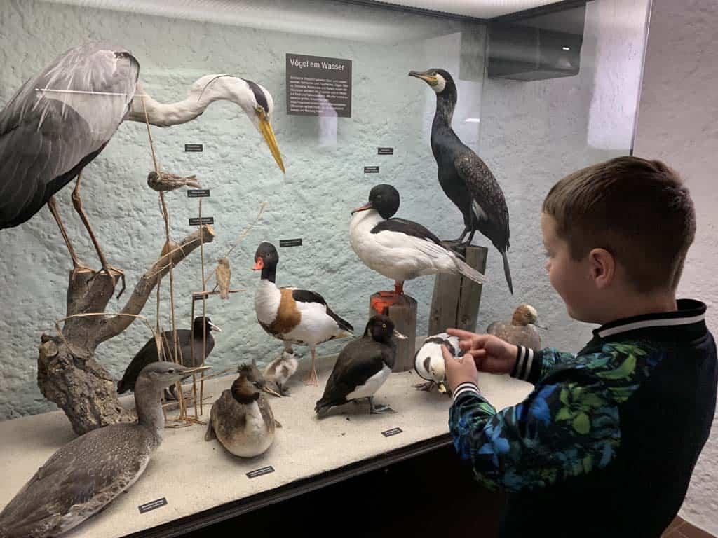 We krijgen een indruk van de vele soorten vogels die in Nationaal Park Vorpommersche Boddenlandschaft leven.