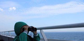M. tuurt de zee over op zoek naar walvissen en dolfijnen