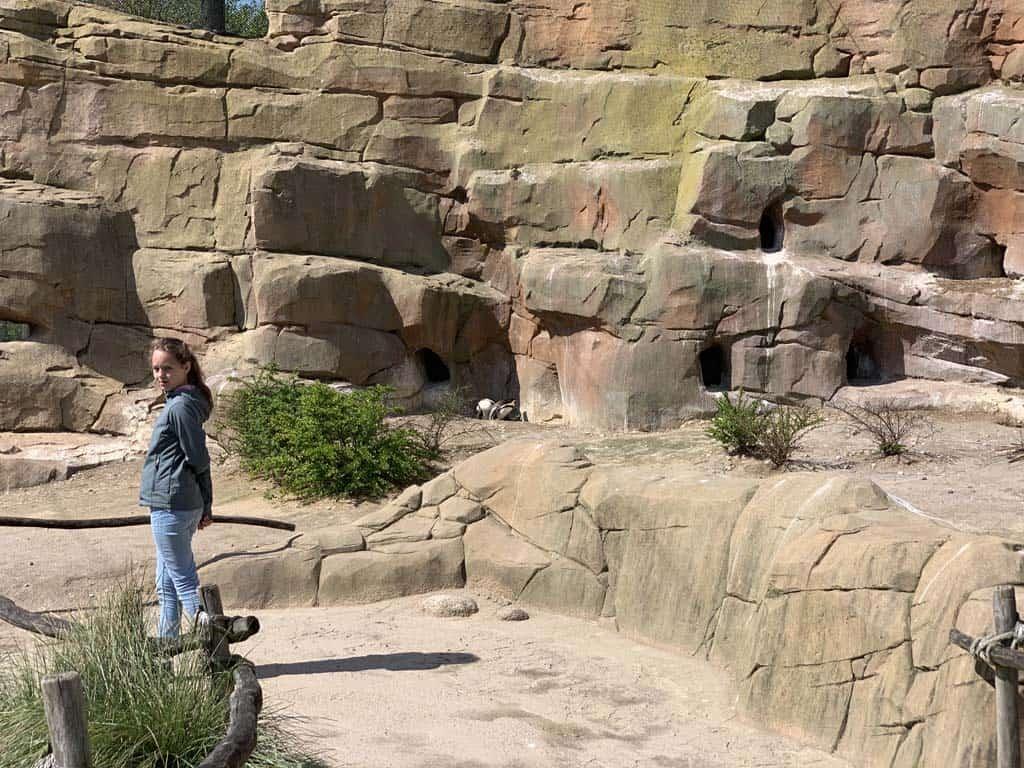 We wandelen door het verblijf van de pinguïns.