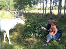 rondreis-zweeds-lapland-011_edited-1