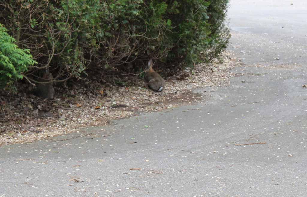 We zien een konijntje over het park lopen