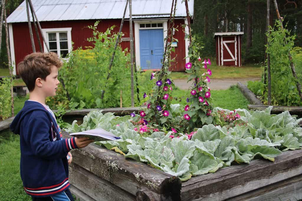 De tuin staat vol gewassen die het barre winterklimaat van Lapland aankunnen.