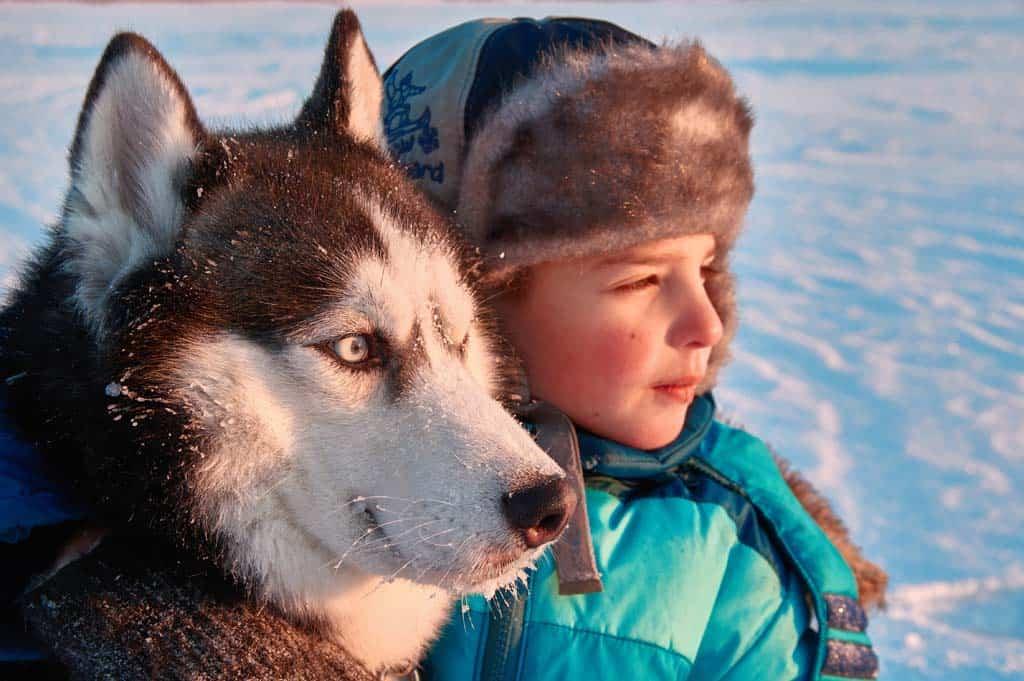 Knuffelen met de husky voor of na de sledetocht. Wat een lieve honden!