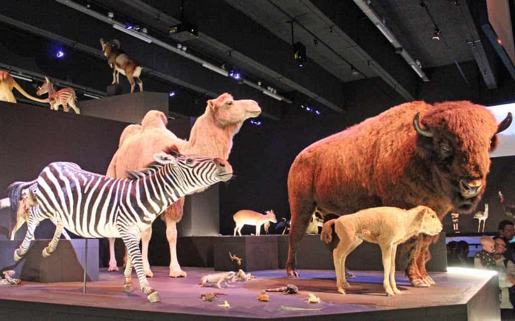 De tentoonstelling Leven laat ons grote en kleine museumstukken zien