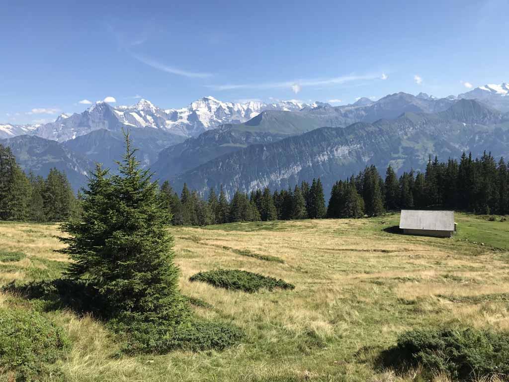 Het laatste stuk van de rondwandeling Niederhorn gaat via een almweide, wederom met prachtig uitzicht op de besneeuwde bergtoppen.