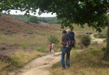 Deze wandelroute over de Posbank is veelzijdig door veranderende natuur en hoogteverschillen