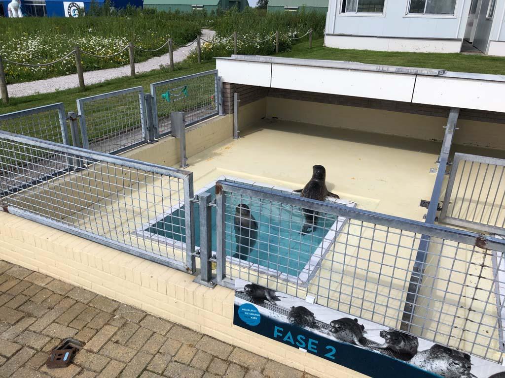 Twee zeehonden in fase 2 van hun verblijf