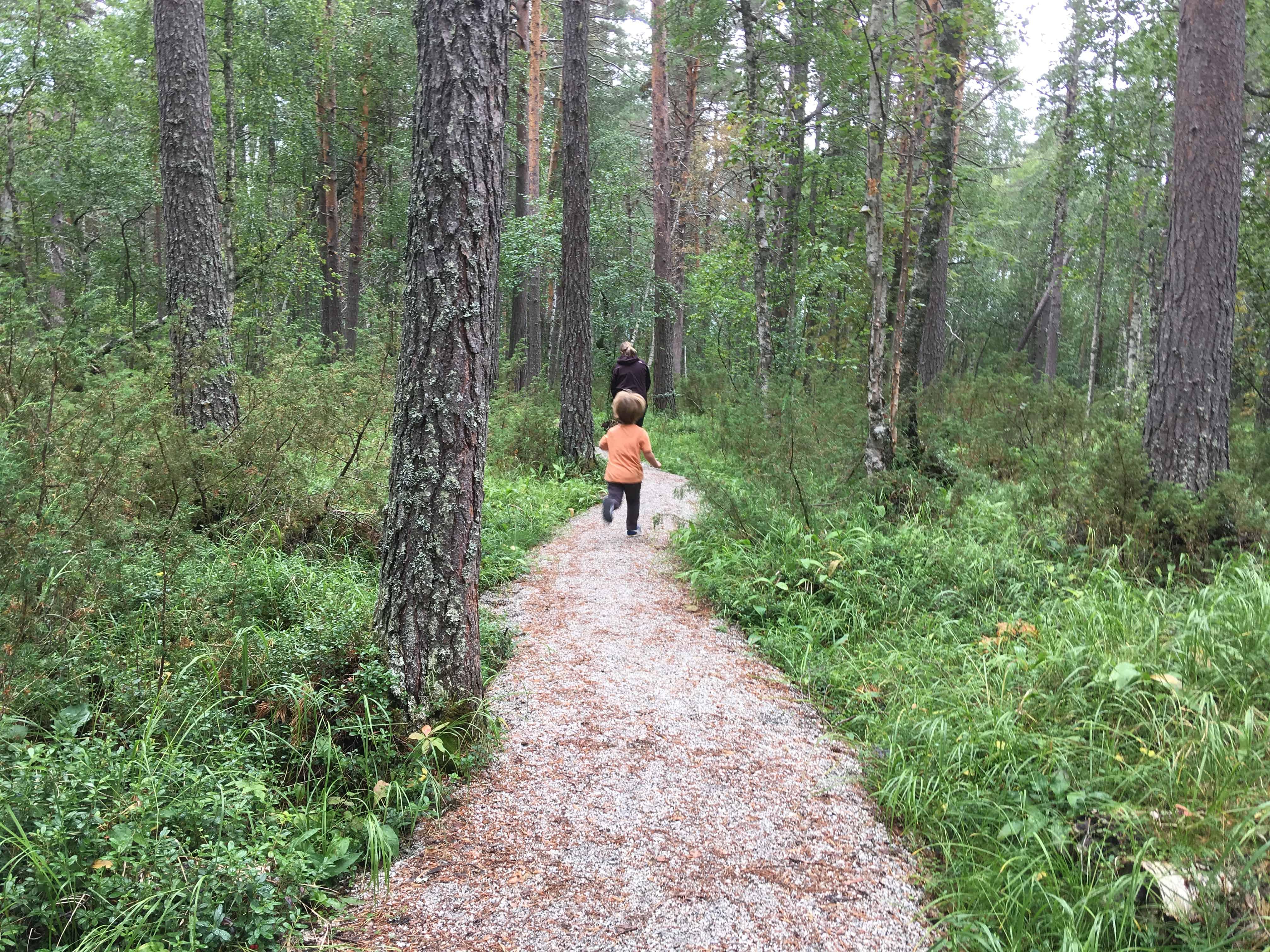 Mooi wandelpad door beschermd bos.