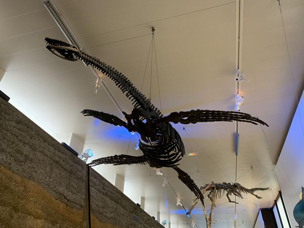 De dino's in Normandië hangen aan het plafond