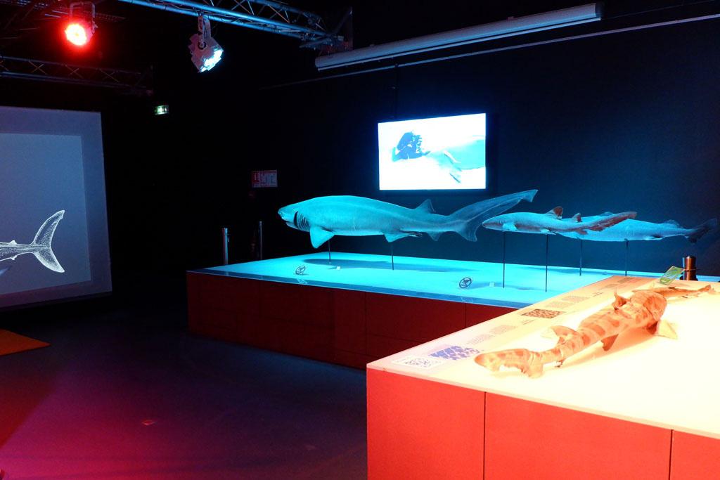Tijdelijke expositie over haaien