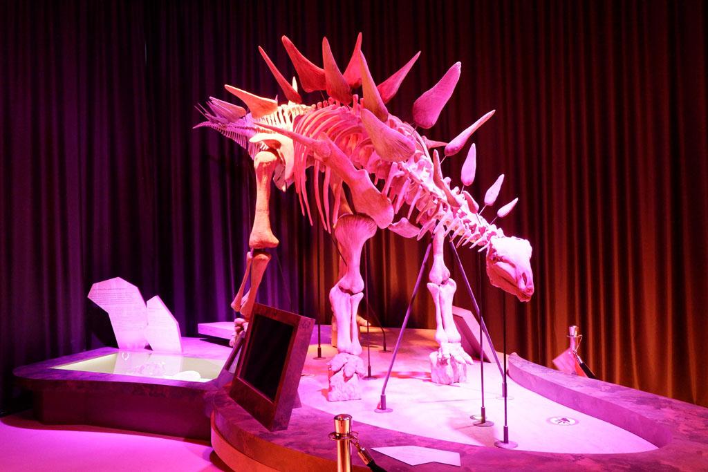 Het skelet van een lexovisaurus, dino's in Normandië