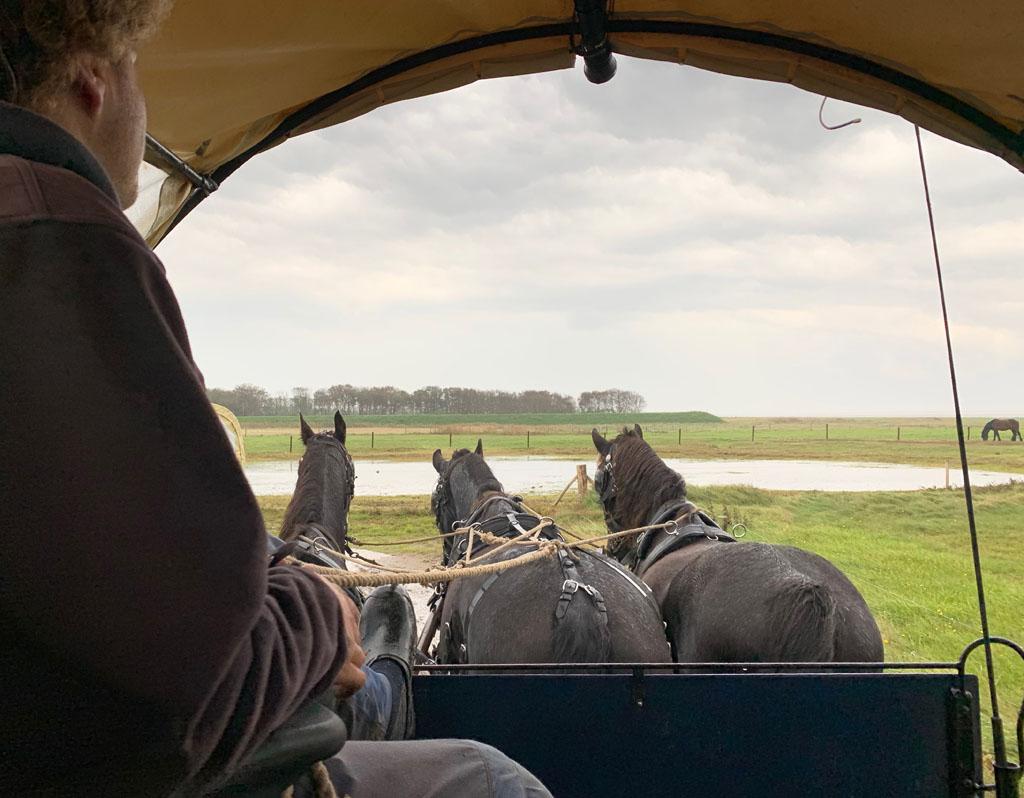 Drie paarden trekken de huifkar vooruit