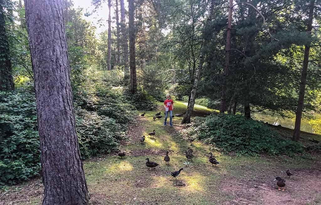 Alle huisjes liggen middenin het uitgestrekte bos
