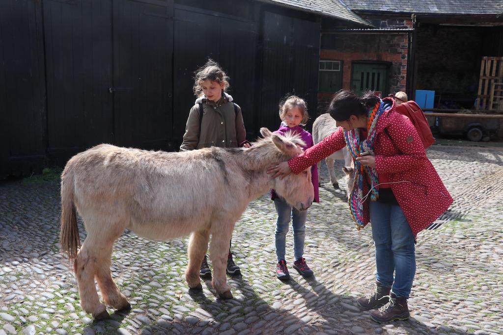 Clovelly is beroemd door de ezels