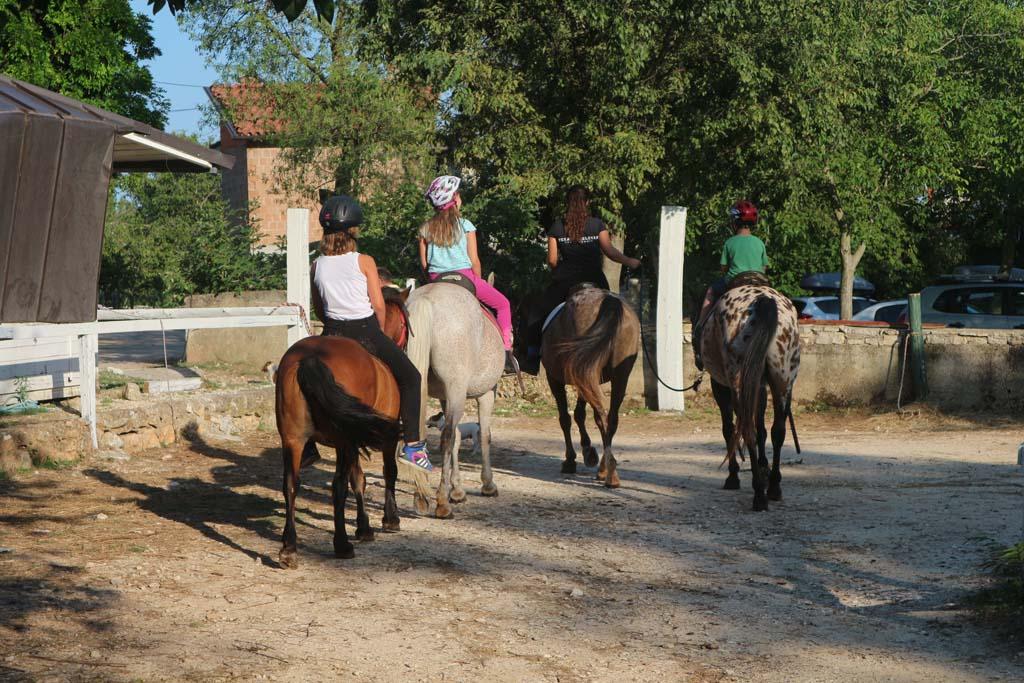 Liefhebbers kunnen paardrijden op de ranch naast de camping.
