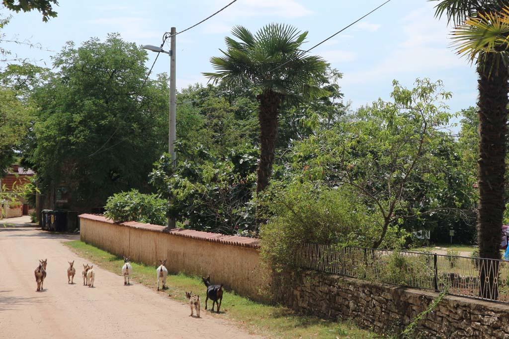 Ook de geiten verlaten af en toe de ranch.