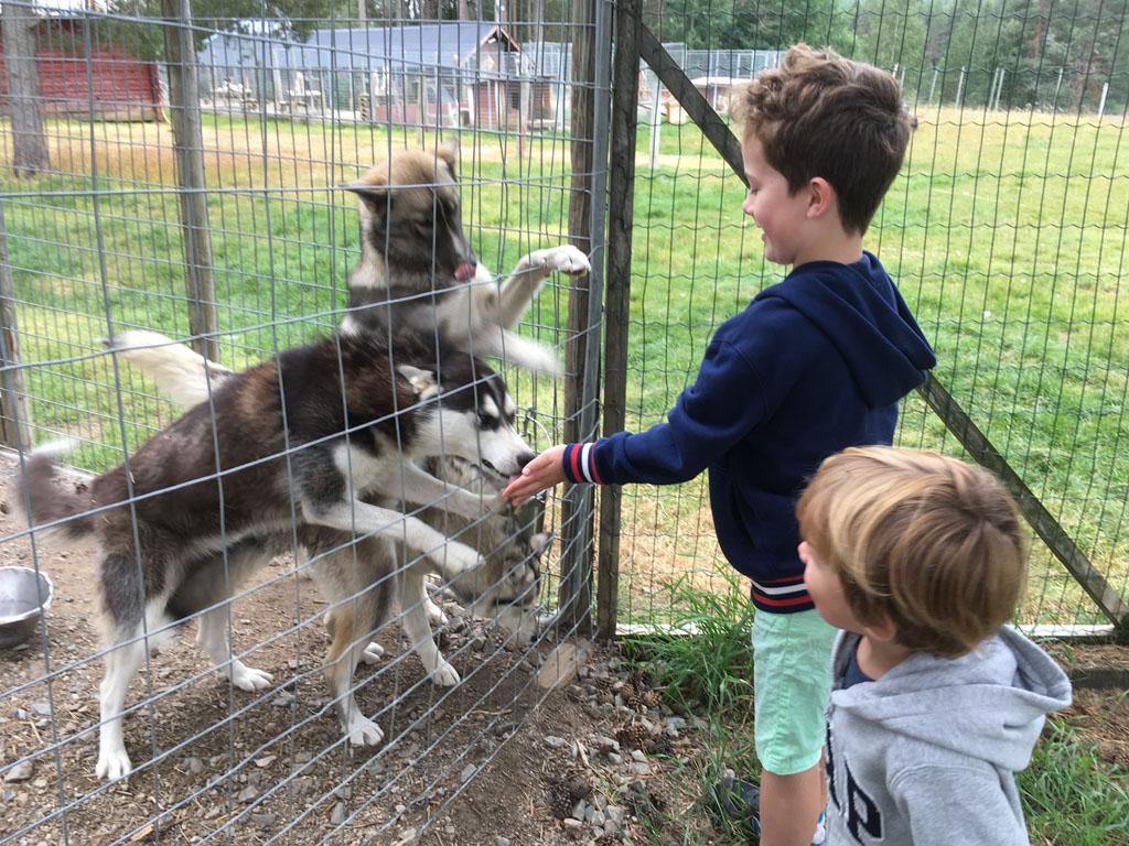 Kennismaken met de honden. Wat zijn ze lief!