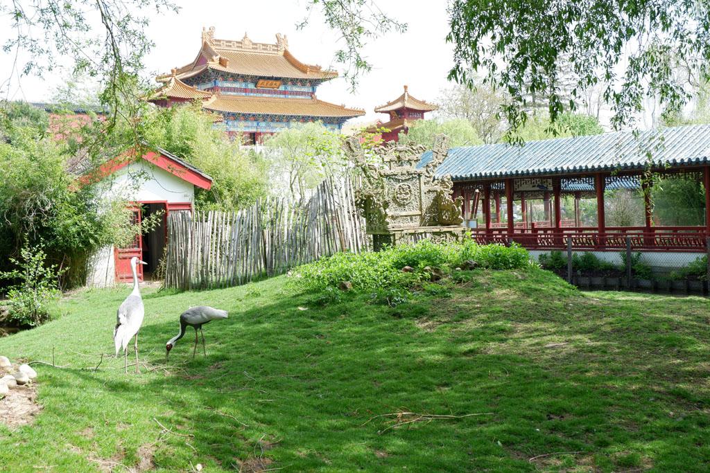 Pairi Daiza Tempel van Mededogen
