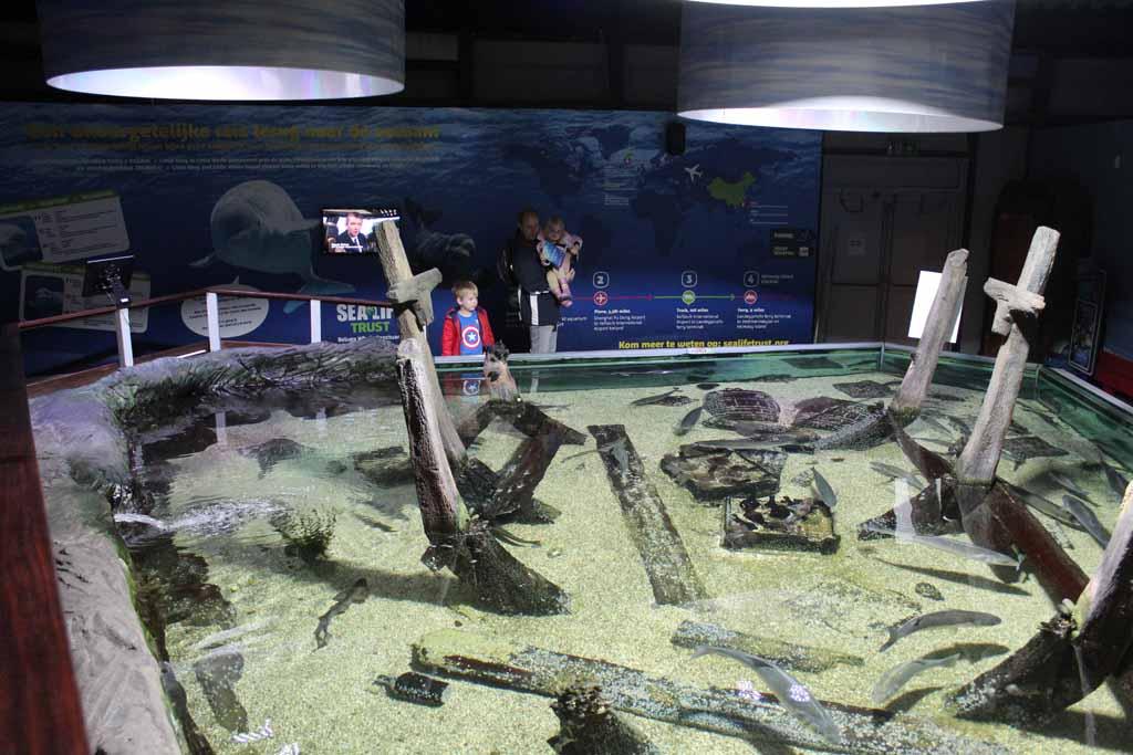 Haaien tellen in het bassin