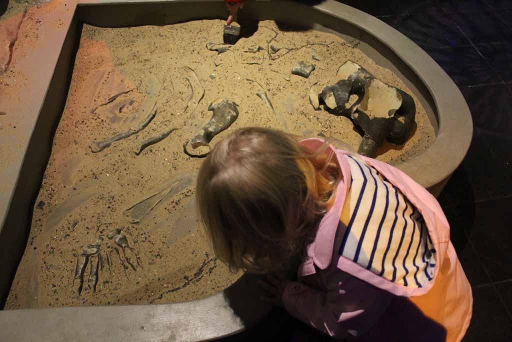 O. zoekt naar zeefossielen