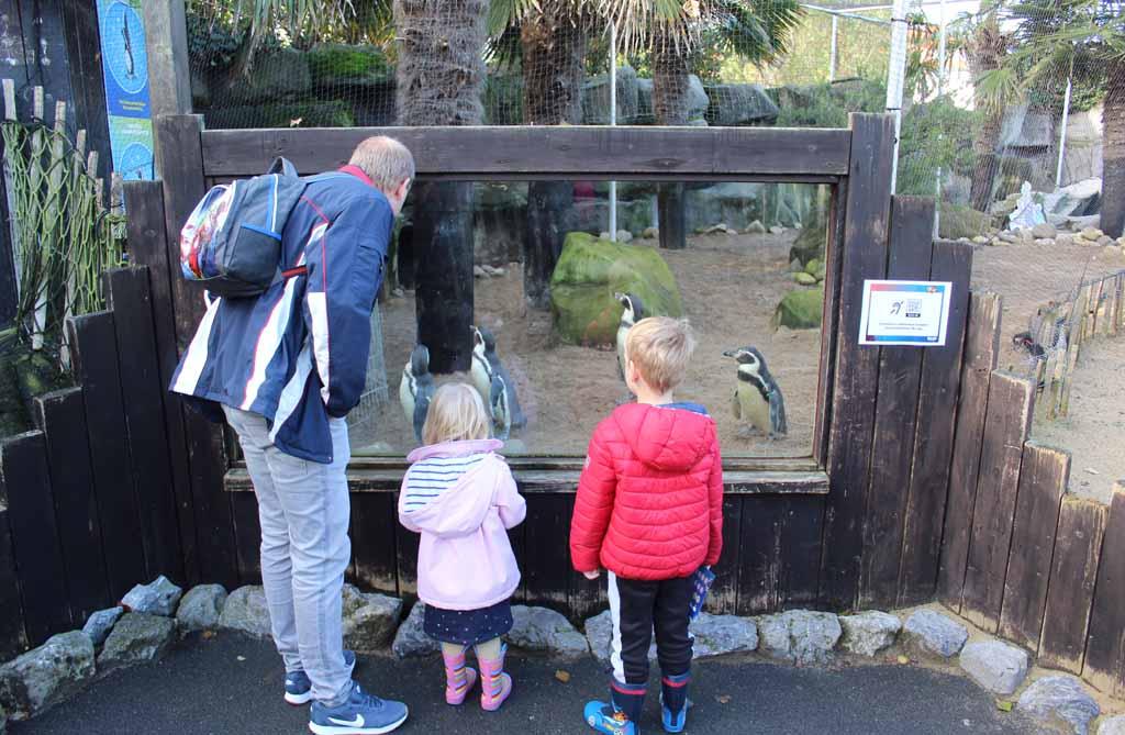 De kinderen vinden de pinguïns zo schattig