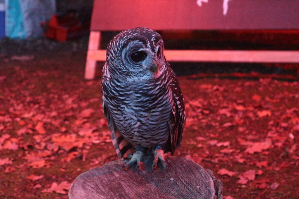Een van de roofvogels die we kunnen bewonderen.
