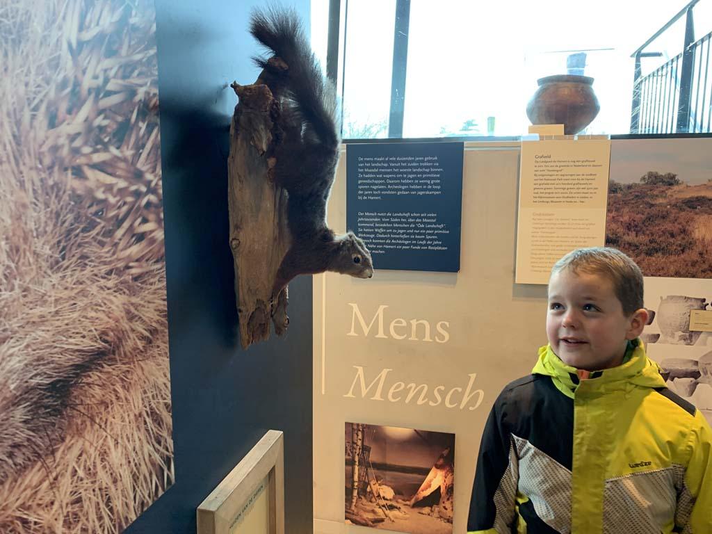 Het bezoekerscentrum van Nationaal Park Maasduinen heeft twee kleine tentoonstellingen.