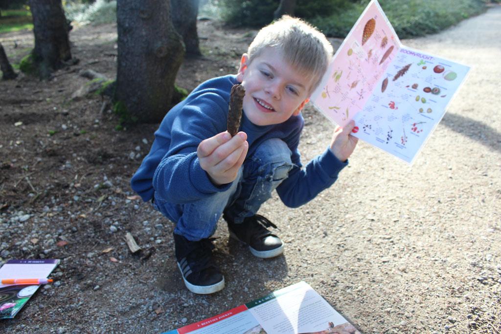 Een dennenappel is een boomvrucht, leert T. uit de boomvruchtenkaart.