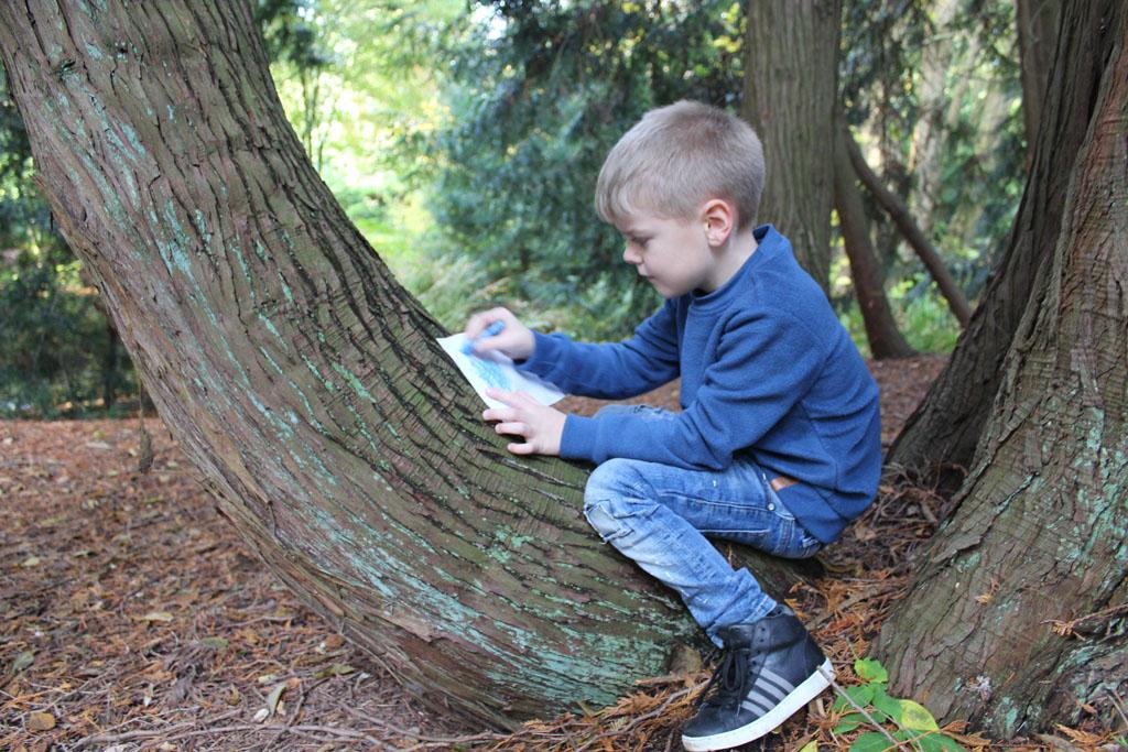 Met een wit papiertje en een krijtje wordt boomschors onderzocht.