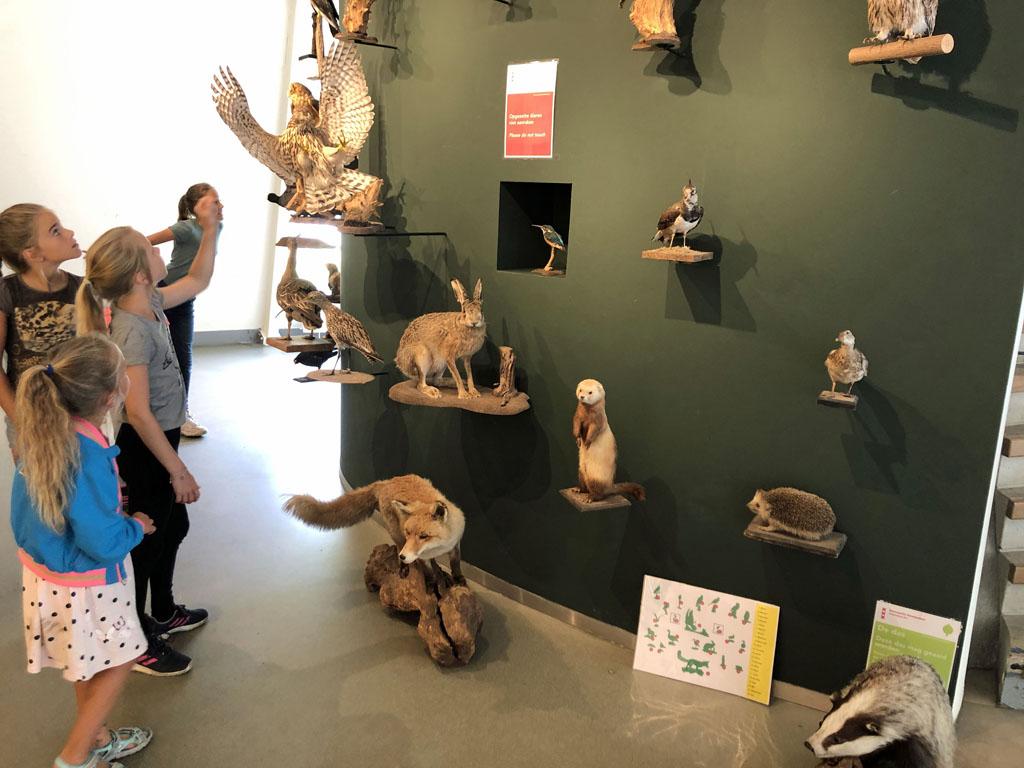 Kijken naar de opgezette dieren