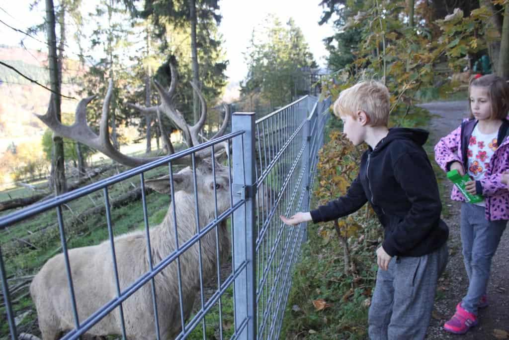 Wildpark Willingen
