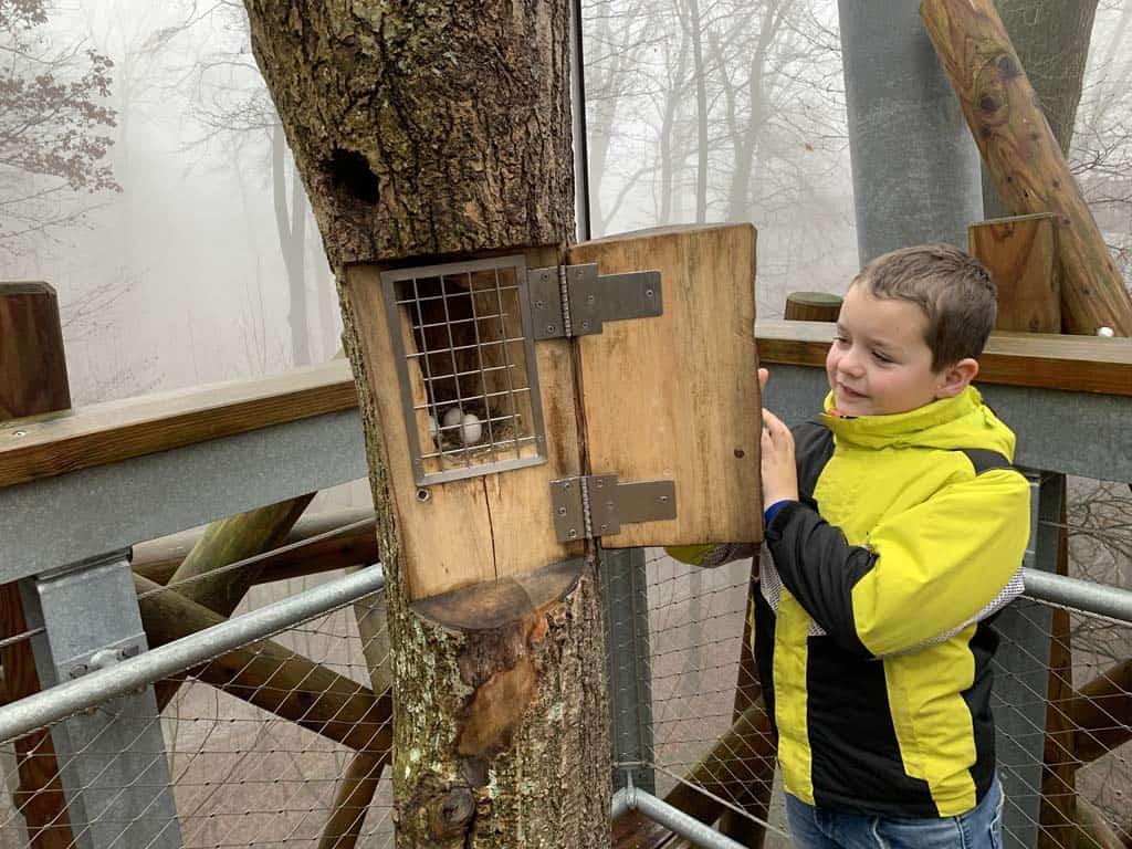 Kijk nou wat we in de boom zien?