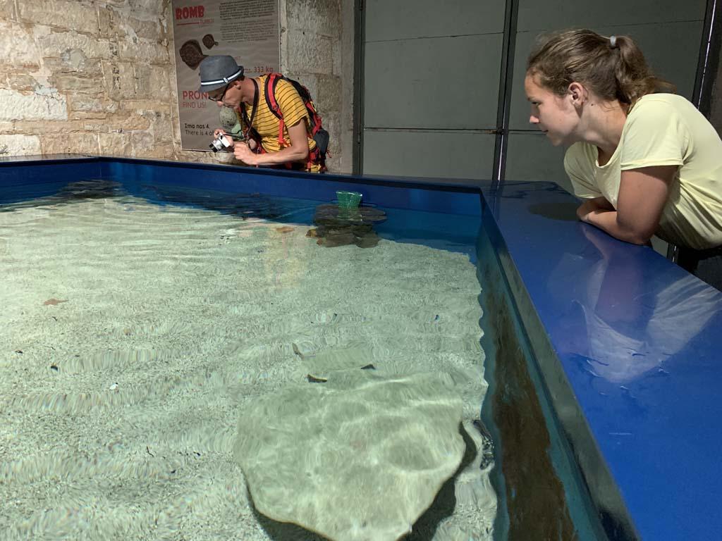 Een bassin vol met kleine haaien en roggen.