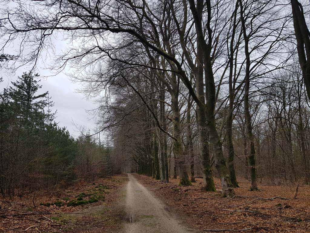 Boswachterij Ugchelen-Hoenderloo