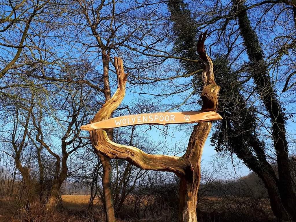 Wandelen in de voetsporen van de wolf die in Drenthe was.