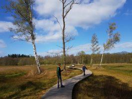 wandeling-landgoed-tongeren-foto-4-vlonderpad