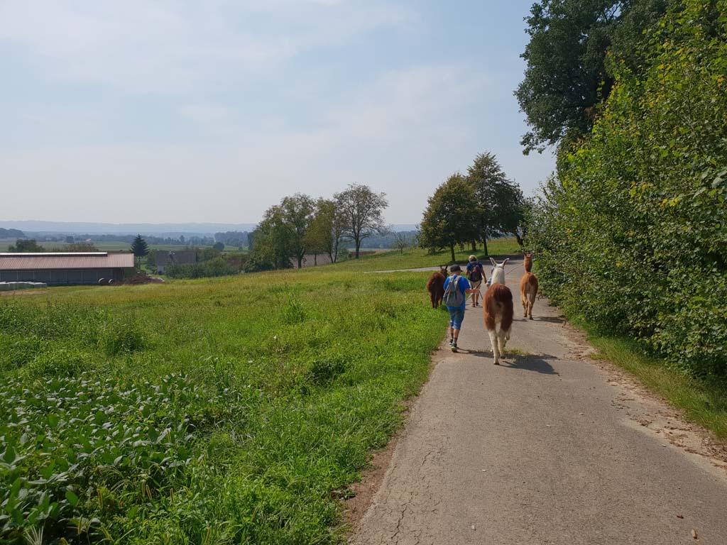 vakantie3 Of wandelen door de bergen met lama's.