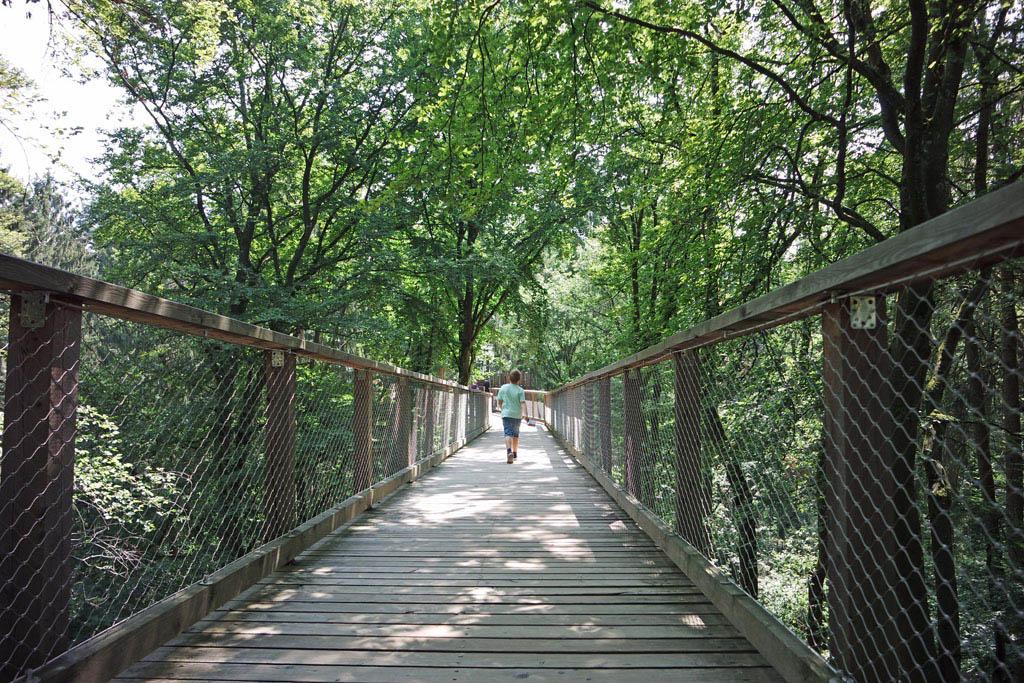 Een lang houten pad slingert door de bossen.