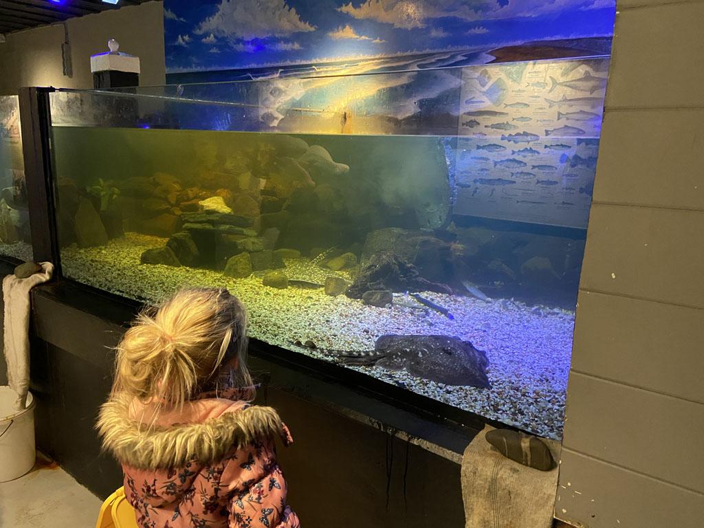 Verschillende roggen, kleine haaien en kreeften zien we in de aquaria