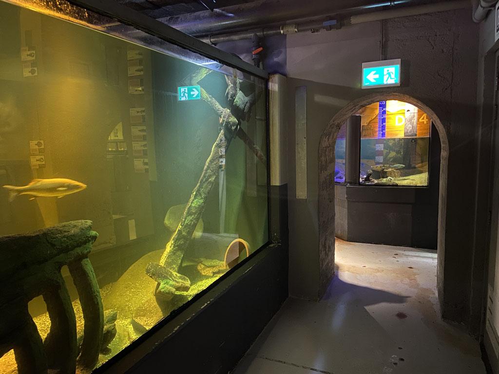 Een compleet anker en een stuk van een scheepswrak ligt in het aquarium