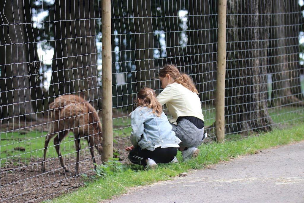Je kunt voer voor de dieren kopen en op de grond strooien zodat ze dichtbij komen.