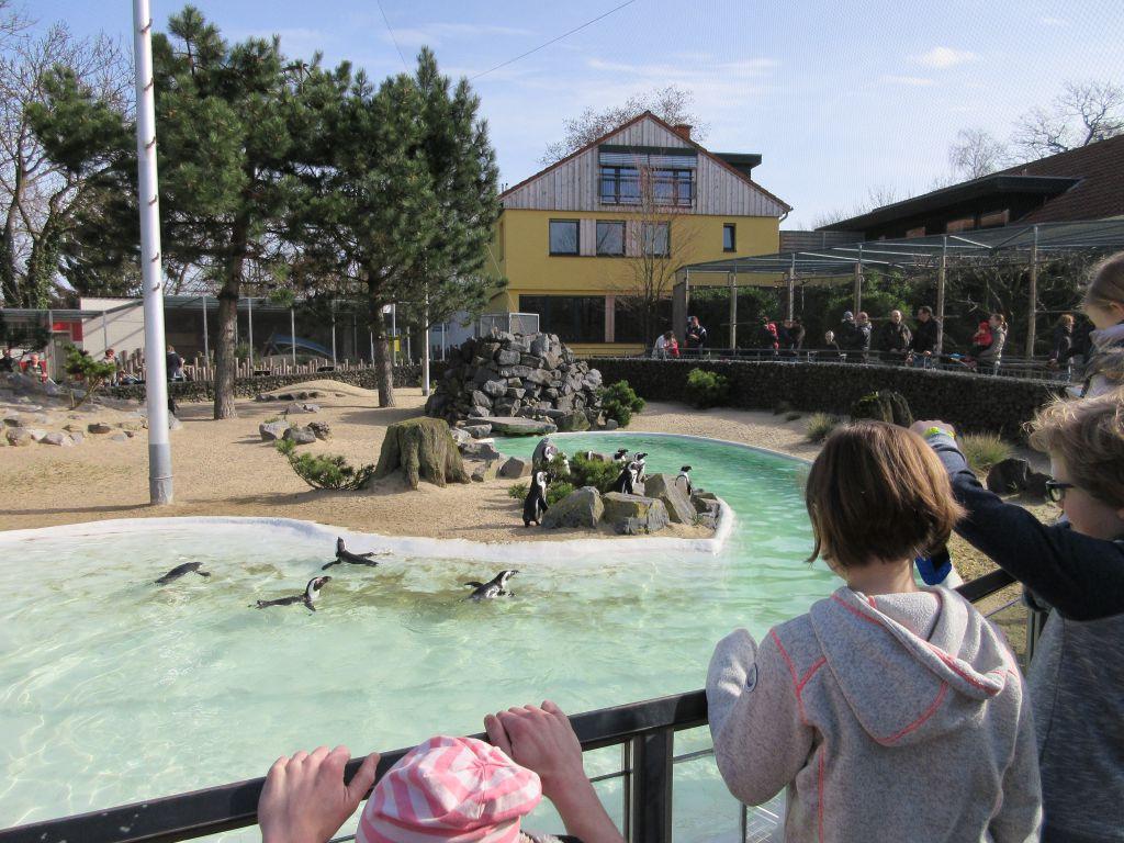 Pinguins kijken bij het Aachener Tierpark, een dierentuin in Duitsland op korte rijafstand van de grens