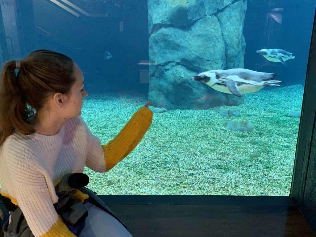 Pinguins kijken in AquaZoo Düsseldorf