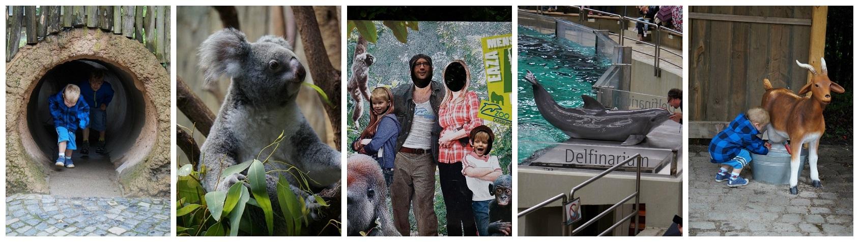 Veel verschillende dieren in de Duisburg Zoo